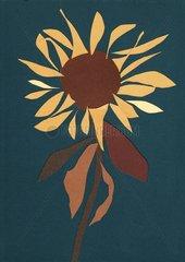 Sonnenblume Blume Herbst
