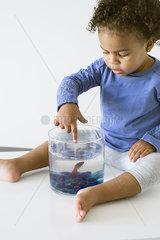Toddler girl playing with pet goldfish