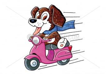 Hund mit Motorroller