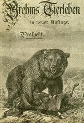 Brehms Tierleben  Prospekt  1900