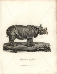 Black rhinoceros from Bruce's Travels to Discover the Source of the Nile  1790.