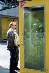 Gelbe Telefonzelle als Aquarium