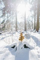 Kuenstlicher Tannenbaum im verschneiten Wald