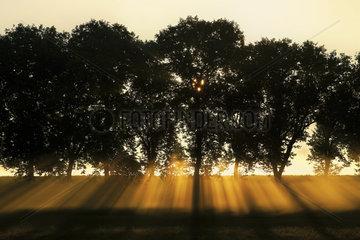 Sonnenstrahlen hinter Baumreihe  Burgund  France