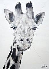 Tiere Giraffe