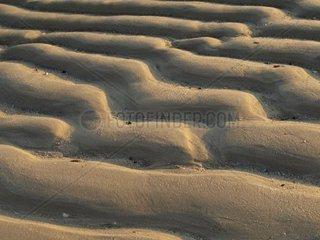 Sandrippel vor Sylt  Schleswig Holstein  Deutschland