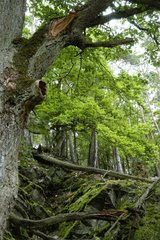 Im Nationalpark Kellerwald