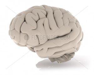 Seitliche Ansicht des menschlichen Gehirns