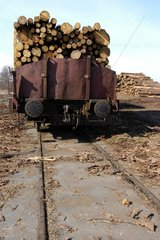 Holz auf die Schiene