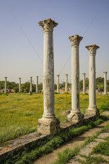 Famagusta  Tuerkische Republik Nordzypern  Zypern - Salamis  archaeologische Ausgrabungsstaette