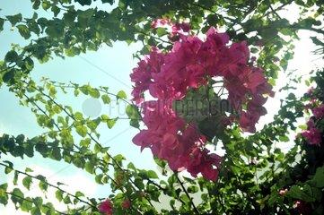 Blume Kranz Busch
