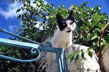 Katze Mauer Blickkontakt