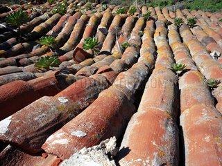 Kanarische Inseln Teneriffa bei Masca Dach