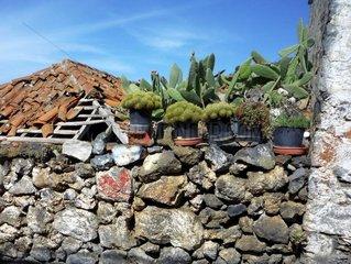 Kanarische Inseln Teneriffa Mauer Opuntien Kakteen