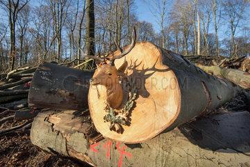 Jagdrevier und Waldwirtschaft