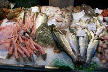 Venedig Fischmarkt