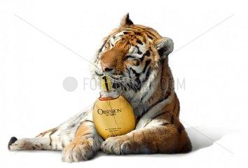 Tiger Parfum