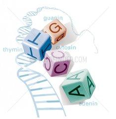 Wuerfel DNA