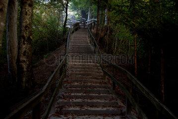 Zuerich  Schweiz  eine Treppe auf dem Weg zum Uetliberg