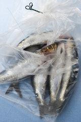 Raw sardines in plastic bag
