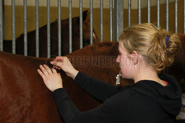 Neuenhagen  Deutschland  Akupunkteurin behandelt ein Pferd