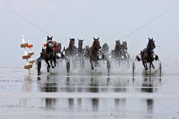 Cuxhaven  Deutschland  Trabrennpferde beim Duhner Wattrennen