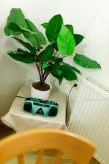Sangerhausen  Deutschland  Kofferradio mit Kunstpflanze auf einem Beistelltisch