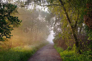 Germany  Bavaria  Swabia  Tussenhausen  forest path and morning fog  Augsburg Western Woods Nature Park
