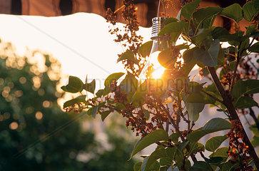 Sunshade  solar-powered lightbulb at sunset