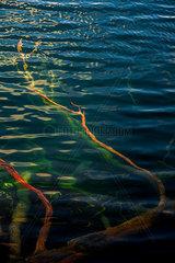 Geaest im Wasser