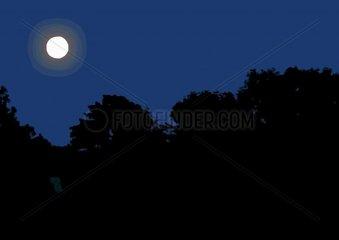 Mond ueber Baeumen