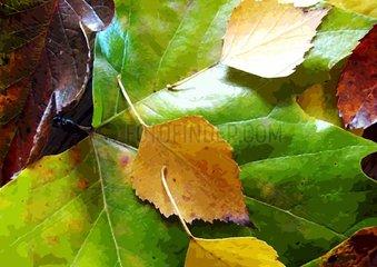 Herbst Laub Blaetter autumn
