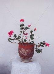 Griechenland Blumentopf
