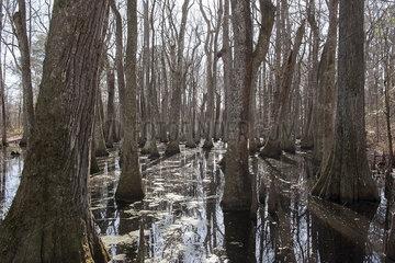 Trees growing in swamp