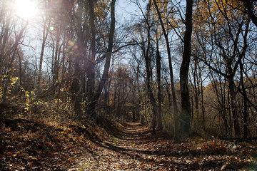 Path trough woods in autumn