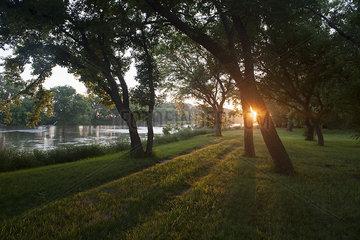 Evening sunlight shining through trees along river bank