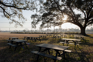 Tranquil scene with picnic tables beneath oak tree in park
