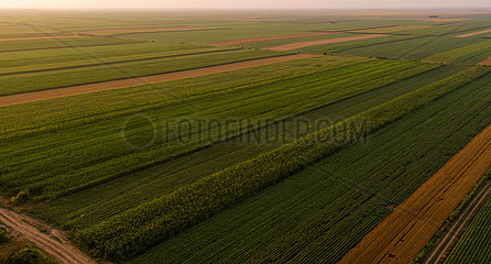 Serbia  Vojvodina  Aerial view of corn  wheat and soybean fields in the late summer afternoon