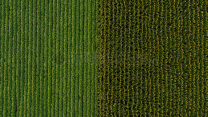 Serbia  Vojvodina  Aerial view of soybean and corn crops
