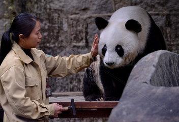 CHINA-FUZHOU-GIANT PANDA BASI-BIRTHDAY (CN)