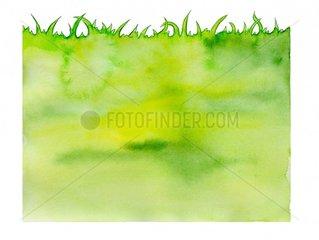 Gras Wiese Gruen