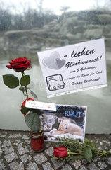 5 Jahre Geburtstag Eisbaer Knut