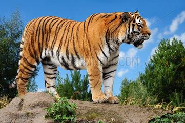 Zoo 168