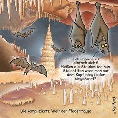 Stalaktiten Stalakmiten Fledermaeuse Tropfsteinhoehle