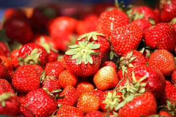Posen  Erdbeeren