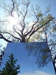 Baum Spiegel