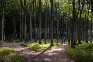 Nienhagen  Deutschland  Radfahrer im Wald bei Nienhagen
