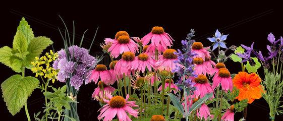 Heilpflanzenarrangement  Roter Sonnenhut;