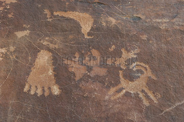 Petroglyphs in Valley of Fire State Park  Nevada  USA