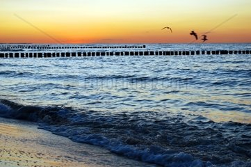 seagulls at sunset at the baltic sea